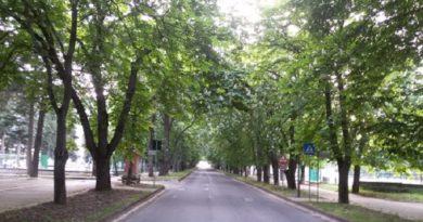 La proposta di legge contro capitozzature e abbattimenti di alberi. Obiettivi e finalità.