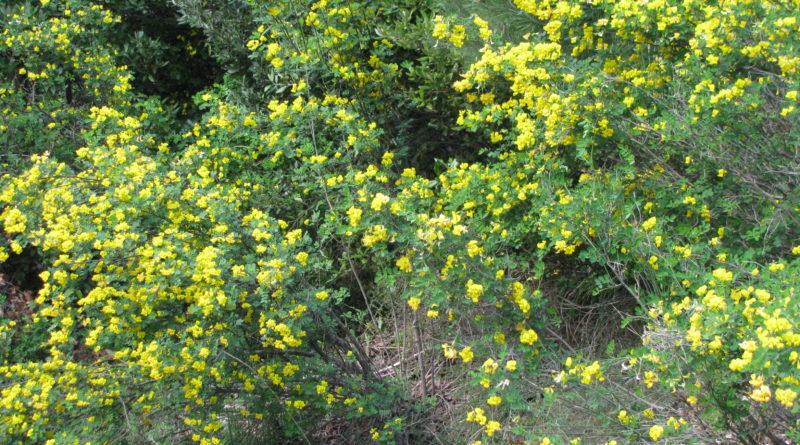 Arbusti Decorativi Da Giardino : Gli alberi e gli arbusti autoctoni dei giardini storici