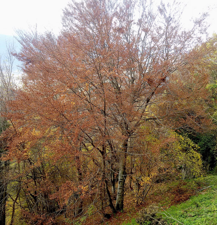 Alberelli Ornamentali Da Giardino gli alberi e gli arbusti autoctoni dei giardini storici