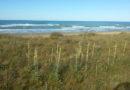 Boschi litoranei e sistemi dunali, difesa contro l'erosione e attrazione turistica