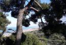"""25 maggio. Seminario """"L'apparato radicale dei pini. Conoscenza, analisi e soluzioni"""". Silvi (TE)."""