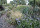 Genio mediterraneo. Vivaio-Giardino I Campi a Milis (OR): qualcosa di nuovo, qualcosa di bello