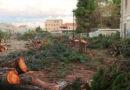 """Il taglio alberi presso l'area ex-FEA a Montesilvano. """"Sconsiderata opera di deforestazione"""""""