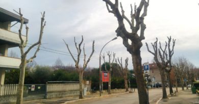 Cattive potature e capitozzature a Chieti. Intervengono le associazioni ecologiste
